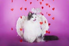 Katt i en klänning av ängeln Royaltyfria Foton