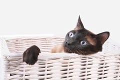 Katt i en korg. Arkivbilder