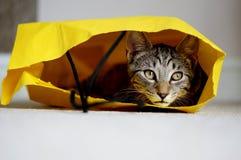 Katt i en pappers- påse Arkivfoton