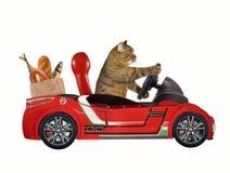 Katt i en röd bil 1 royaltyfri foto