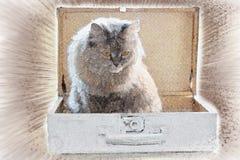 Katt i en resväska Royaltyfri Bild