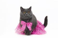 Katt i en rosa klänning royaltyfri bild