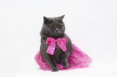 Katt i en rosa klänning royaltyfri fotografi