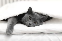 Katt i en säng Royaltyfri Bild