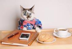 Katt i en skjorta och en fluga som dricker kaffe på arbete Royaltyfri Fotografi