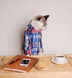 Katt i en skjorta och en fluga som dricker kaffe på arbete Royaltyfri Foto
