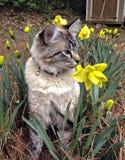 Katt i en trädgård Arkivfoto