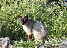 Katt i en trädgård Arkivfoton