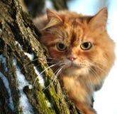 Katt i en tree Arkivbilder