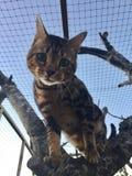 Katt i en tree Fotografering för Bildbyråer