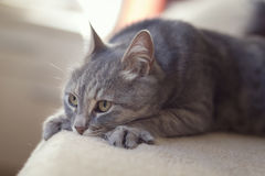 Katt i en varv för kvinna` s royaltyfri foto