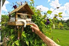 Katt i en voljär royaltyfri bild