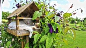 Katt i en voljär arkivfoton