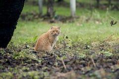 Katt i fält Royaltyfri Foto