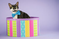 Katt i färgrik ask Royaltyfria Bilder