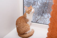 Katt i fönster Royaltyfri Bild
