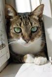 Katt i fönstret Royaltyfri Bild