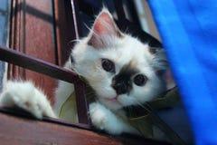 Katt i fönstret Royaltyfria Bilder