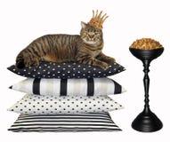 Katt i för krona den torra matningen 2 nära arkivbild