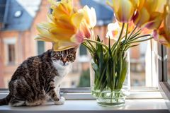 Katt i f?nstret royaltyfri fotografi