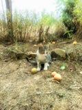 Katt i fruktträdgård Fotografering för Bildbyråer