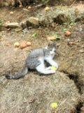 Katt i fruktträdgård Arkivfoton