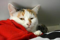 Katt i garderoben Arkivfoton