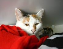 Katt i garderoben Royaltyfri Foto