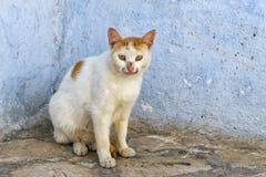 Katt i gata i Kairouan, Tunisien royaltyfri fotografi