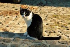 Katt i gatan Arkivfoto