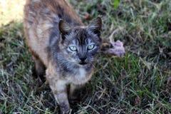Katt i gräs Arkivbilder