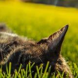 Katt i gräs Fotografering för Bildbyråer