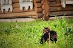Katt i gräs Arkivfoto