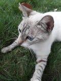 Katt i gräset royaltyfria bilder