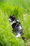 Katt i gräset Royaltyfria Foton