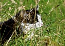 Katt i gräset Arkivbilder