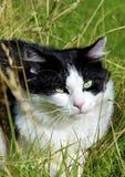 Katt i gräset Royaltyfri Bild