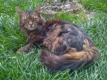 Katt i gräset Arkivfoto