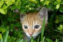 Katt i gräset royaltyfri foto