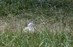Katt i gräset - RÅTT format fotografering för bildbyråer