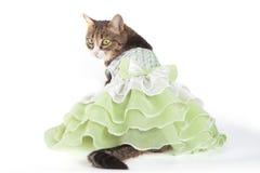 Katt i grön frilling klänning på vit bakgrund royaltyfri bild