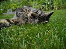 Katt i grönt paradis Arkivbild