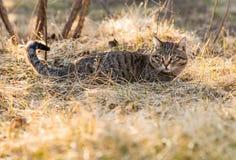 Katt i gr?set royaltyfri bild