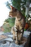 Katt i grekisk taverna Arkivbilder