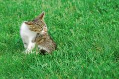 Katt i gräs Royaltyfri Fotografi