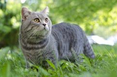 Katt i gräs Royaltyfri Bild