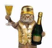 Katt i guld- väst arkivbilder