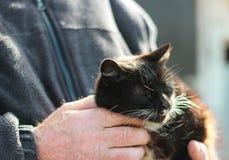 Katt i händerna av en man Royaltyfria Foton