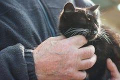 Katt i händerna av en man Arkivbild