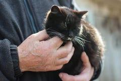 Katt i händerna av en man Royaltyfri Foto